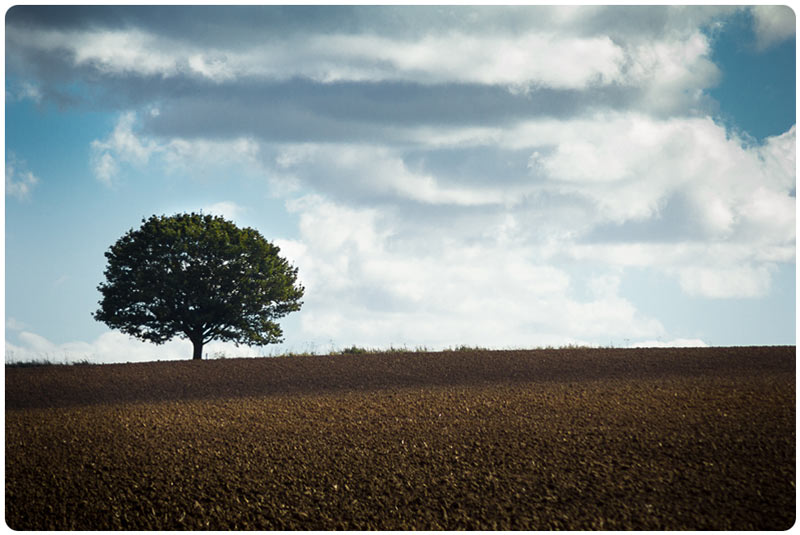 Landscape photo of a lone tree in a freshly ploughed field
