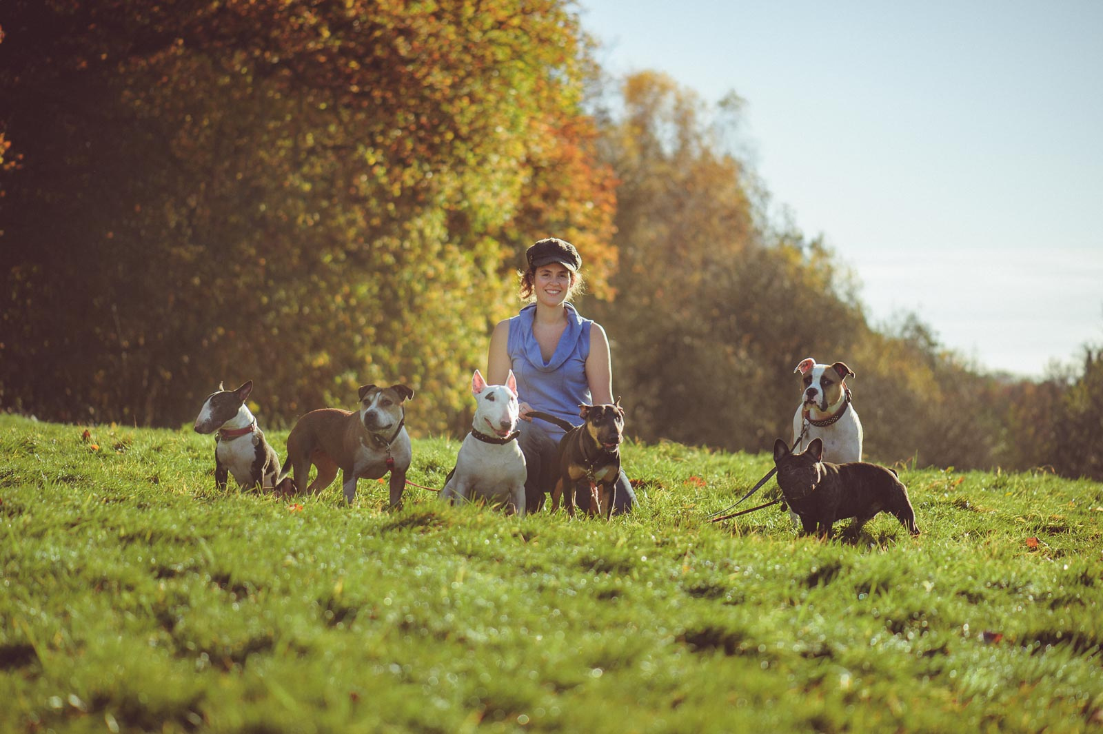 Pet Photography featuring Six Dogs